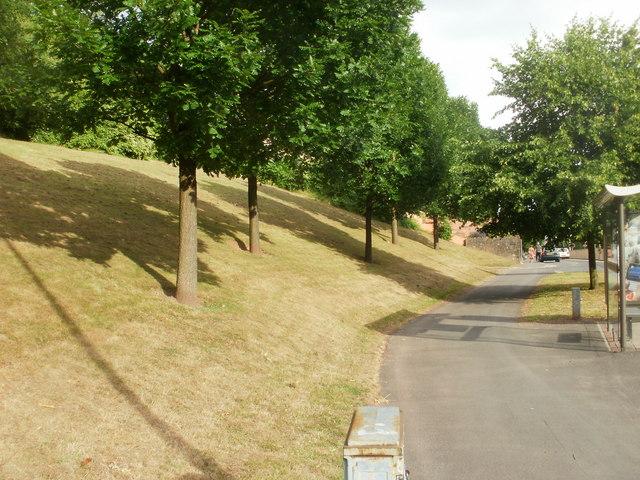 Tree-lined steep bank, Malpas Road, Newport