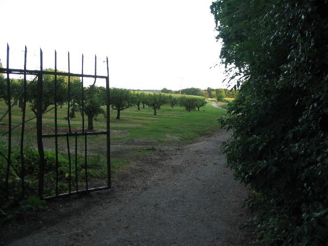 Orchard at Little Barton Farm