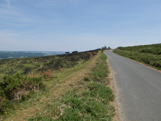 Along the road at Black Hill