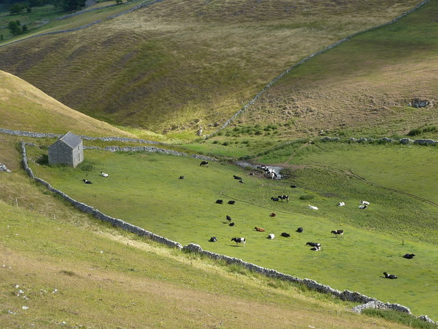 Barn and cattle, Narrowdale