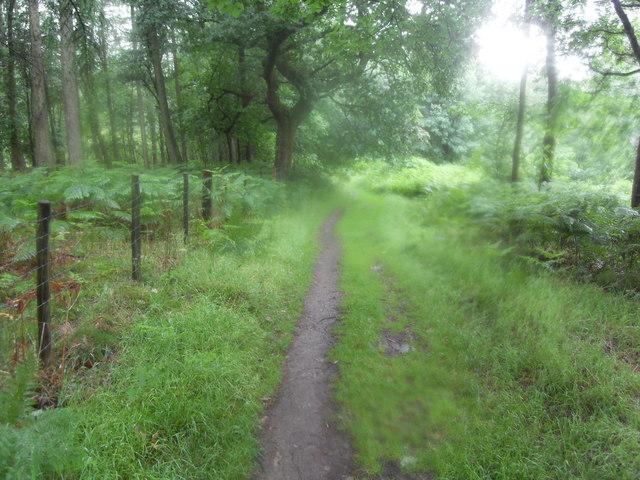 Track Through Rather Heath Woods