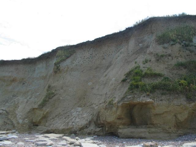 Cliffs at Reculver