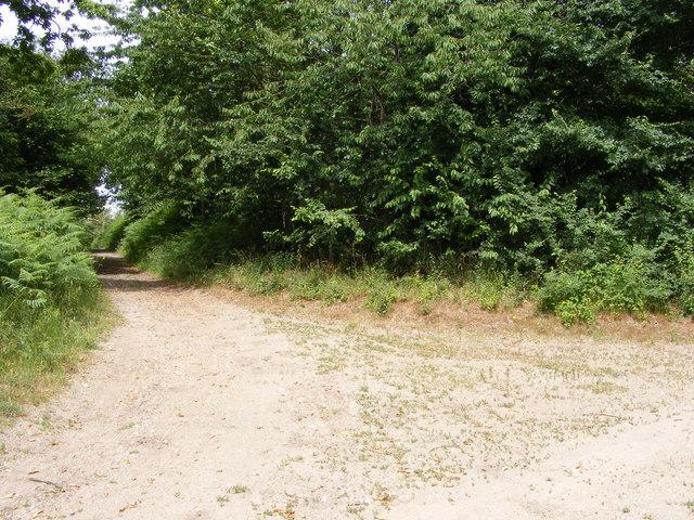 Angles Way towards Somerleyton