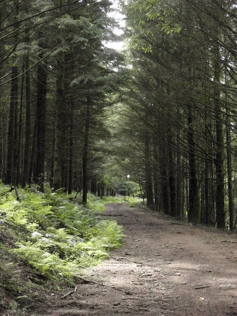 Forest Track in Craig yr Aber