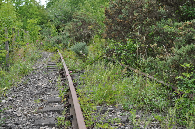 Overgrown tracks of the former Wye Valley Railway
