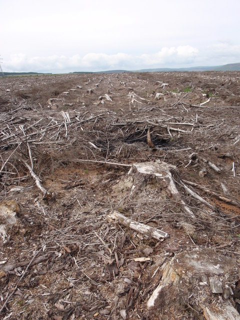 Cleared Timber on Margam Mountain
