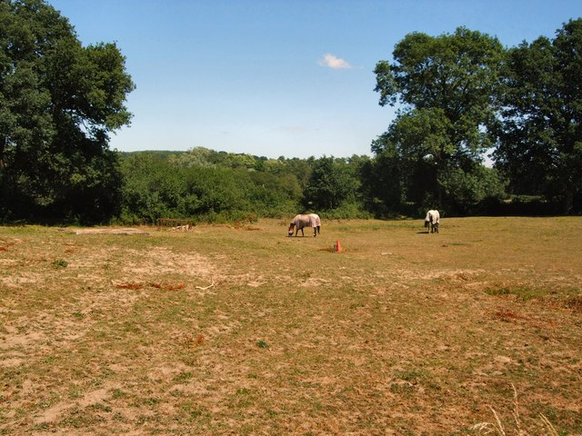 Horses in farm north of Lindfield