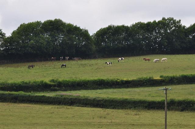Exmoor : Horses in a Field