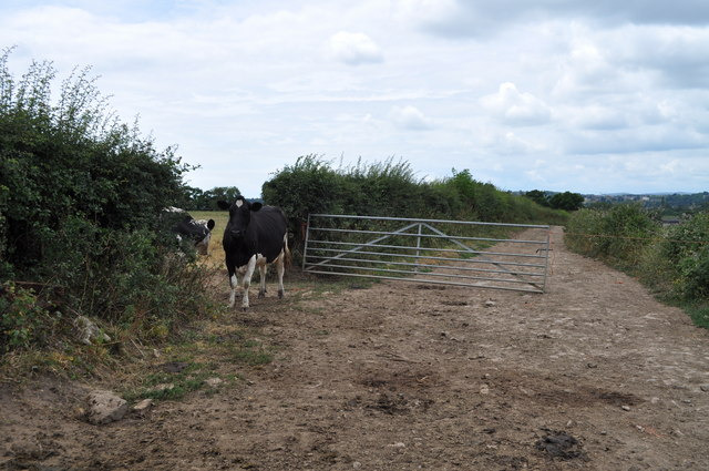 Section of track from Tump Farm to Pighole Pill - looking towards Tump Farm
