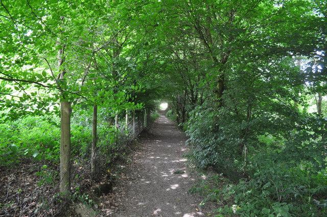 Exmoor : Footpath & Trees