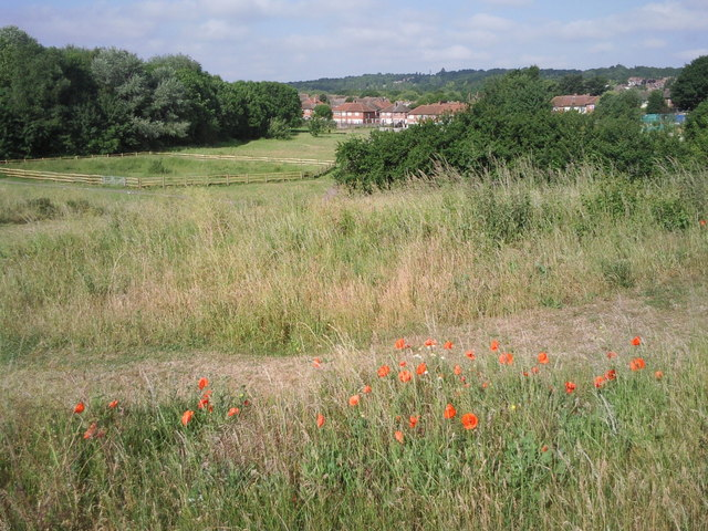 Poppies at East Wickham Open Space