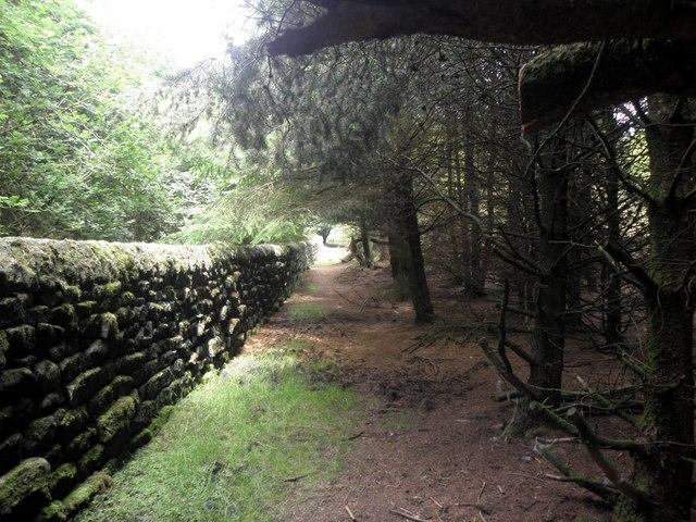 Footpath in woodland plantation