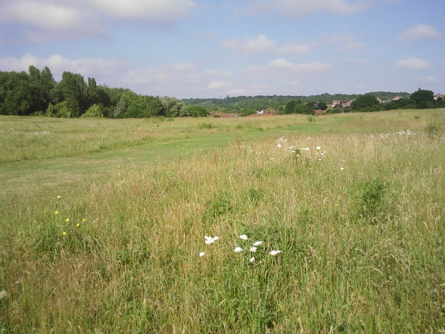 Grassland wild flowers at East Wickham Open Space