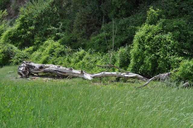 Remains of a tree at Sedbury Cliffs