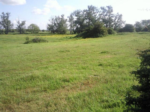 Looking across Crayford Marsh