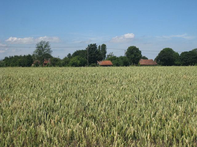 Wheat Field alongside Kake Street