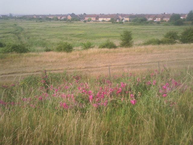 A summer's morning at Crayford Marsh
