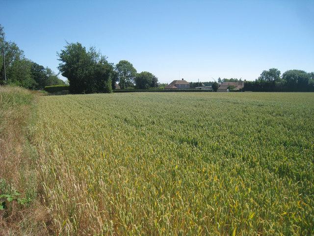 Wheat Field off Thorn Lane