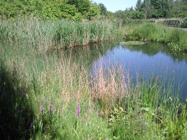 Summer at the London Wetland Centre
