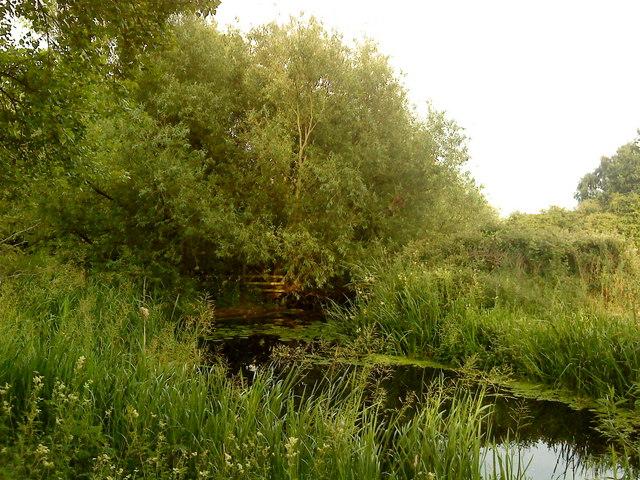 Attenborough Nature Reserve