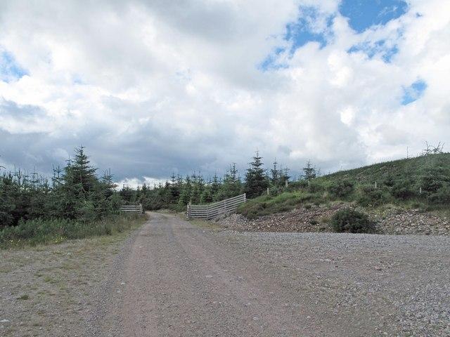 Borgie Forest