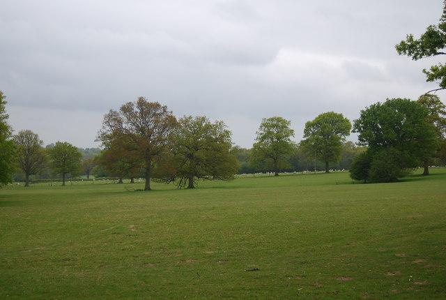 Trees north of Hurstwood Lane