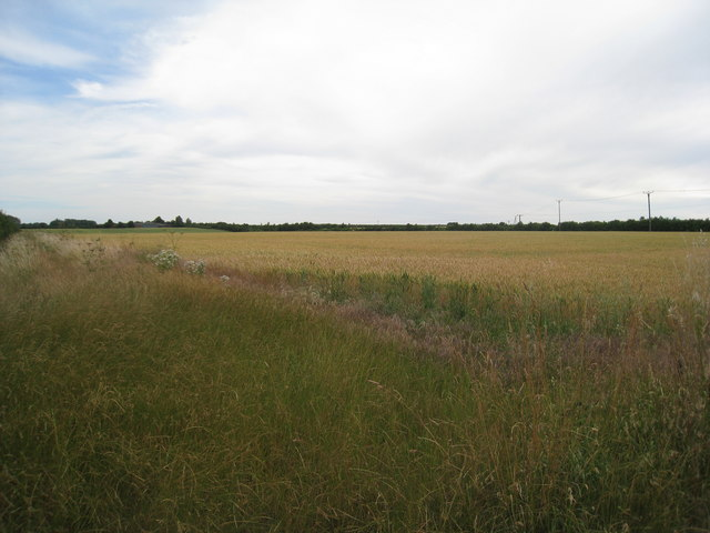 Field by the A15