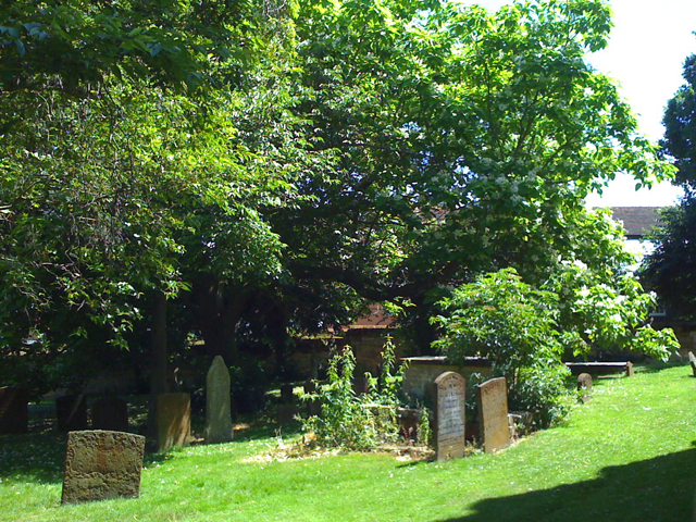 Memorials and trees, St Mary's churchyard