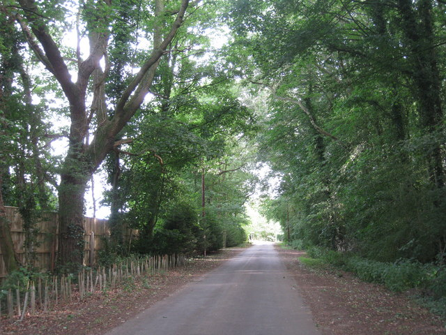 Wooded road near Stoneholme