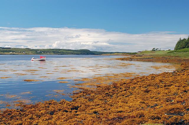 Loch Eyre shoreline