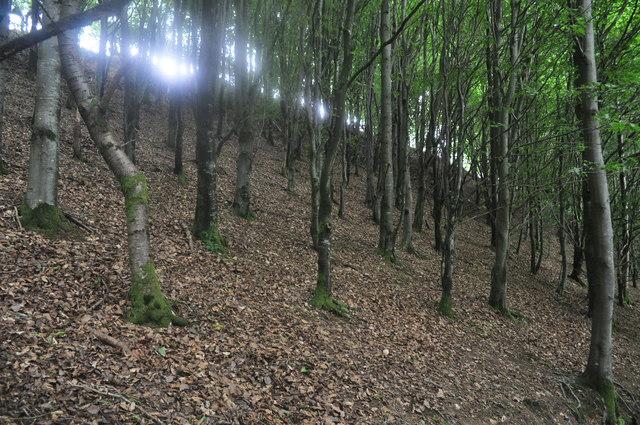 Exmoor : Wimbleball - Woodland