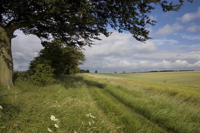 Yorkshire Wolds Way near Wharram Percy