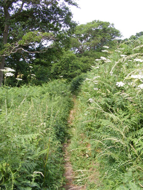 Footpath beside the marshes