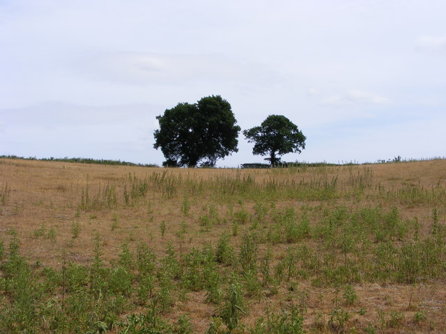 Heathland near Blundeston Marshes