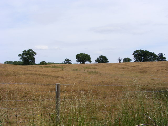Heathland near Blundeston Marshes