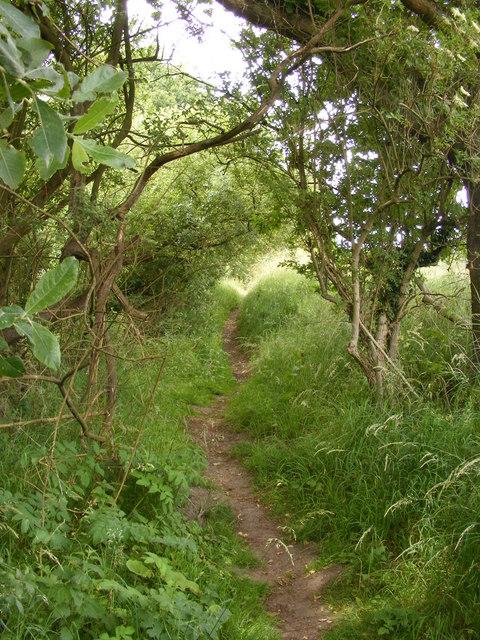 Footpath through woodland