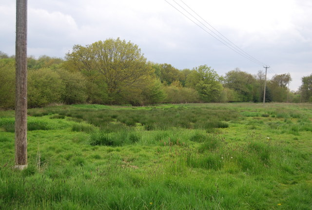 Mashy area on the valley floor of the Sussex Ouse