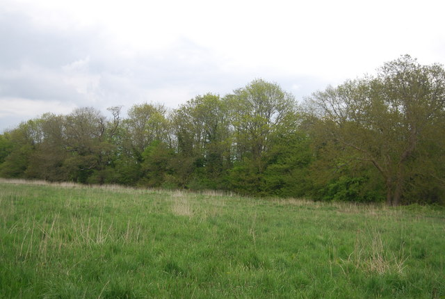 Trees along the River Ouse (Sussex)