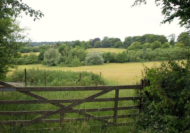 Field with ponds near Winters Cross