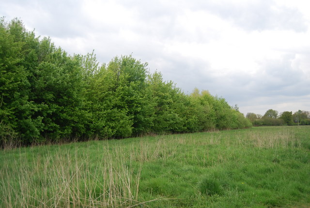 A line of trees in the Ouse valley south of Sheffield Park