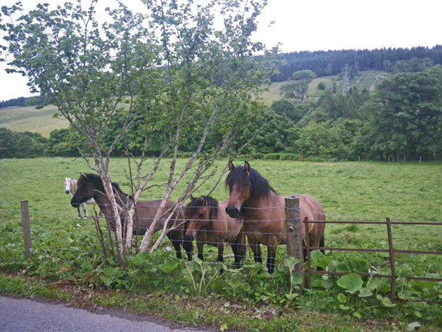 Roadside class for horses in GPS use