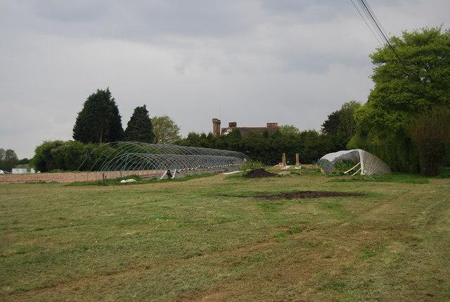 Polytunnels, Waspbourne Manor Farm