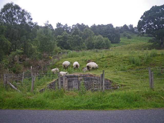 Muddy  sheep by an ancient vault