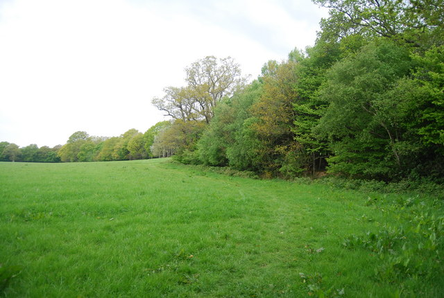 The southern edge of Wapsbourne Wood