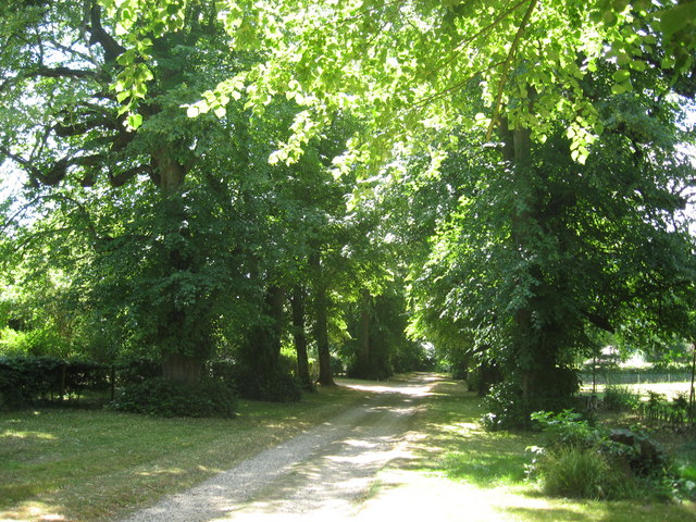 The avenue of lime trees leading down to Lord Greys fishing lodge