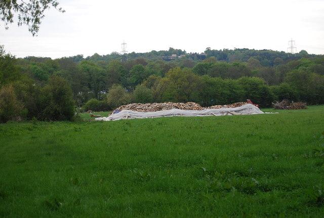 A large pile of logs near Wapsbourne Manor