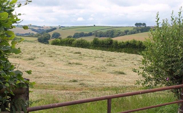 Mown grass field, Hill Lane