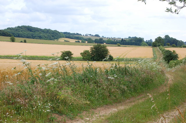 Farm track near Charlton Abbots in July