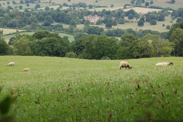 Sheep grazing below Belas Knap