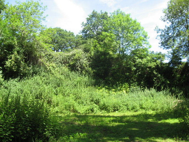 Overgrown chalkpit beside the River Itchen
